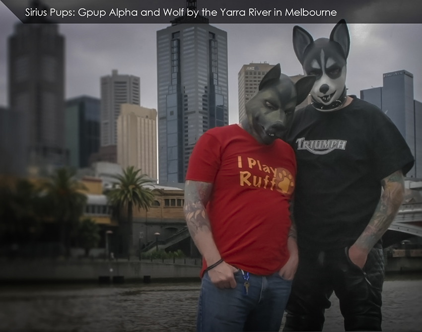 Alpha Wolf by River.jpg