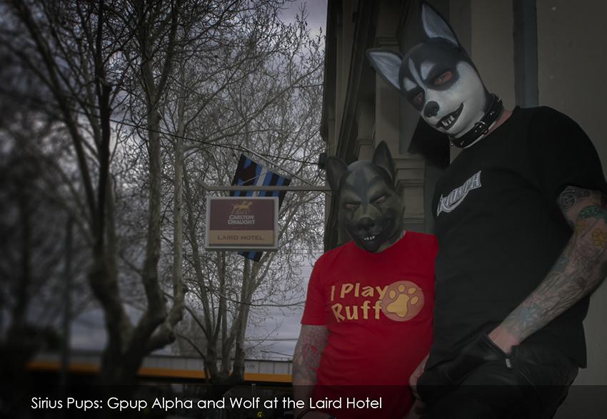 Alpha Wolf Laird2.jpg