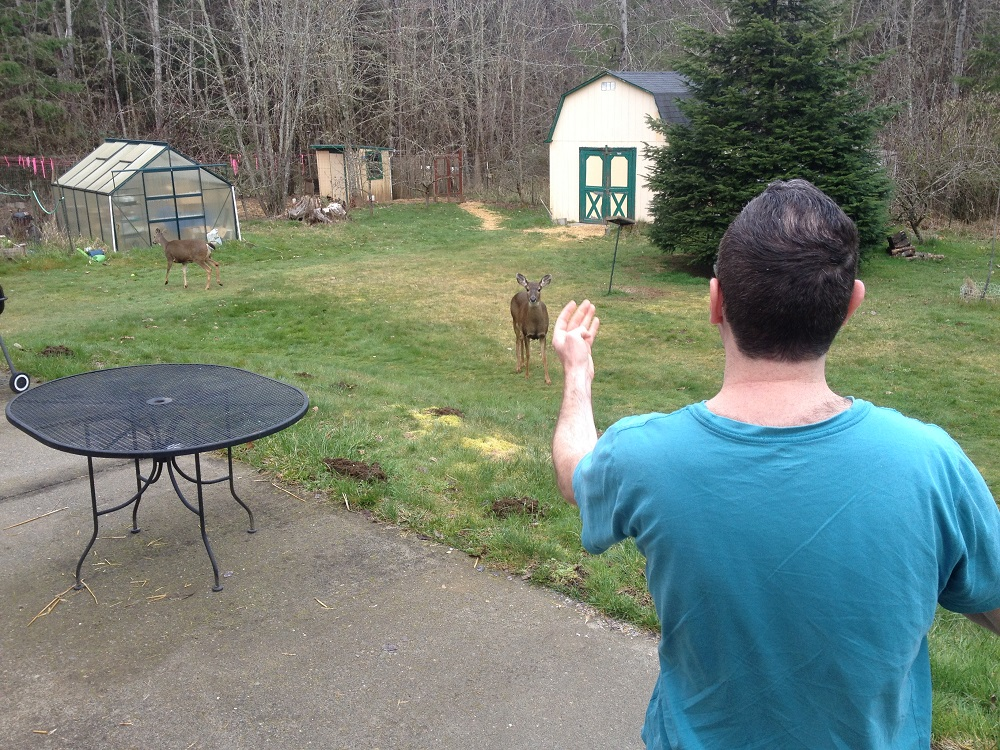 My son, James, throws apples to deer in our backyard