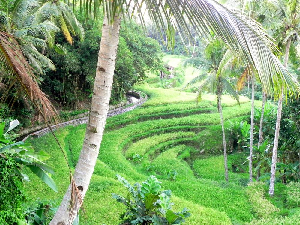 Tegalalang rice field || Photograph: The Oloo Blog