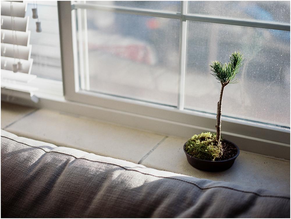 Plants_006.jpg