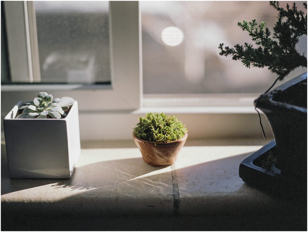 Plants_002.jpg