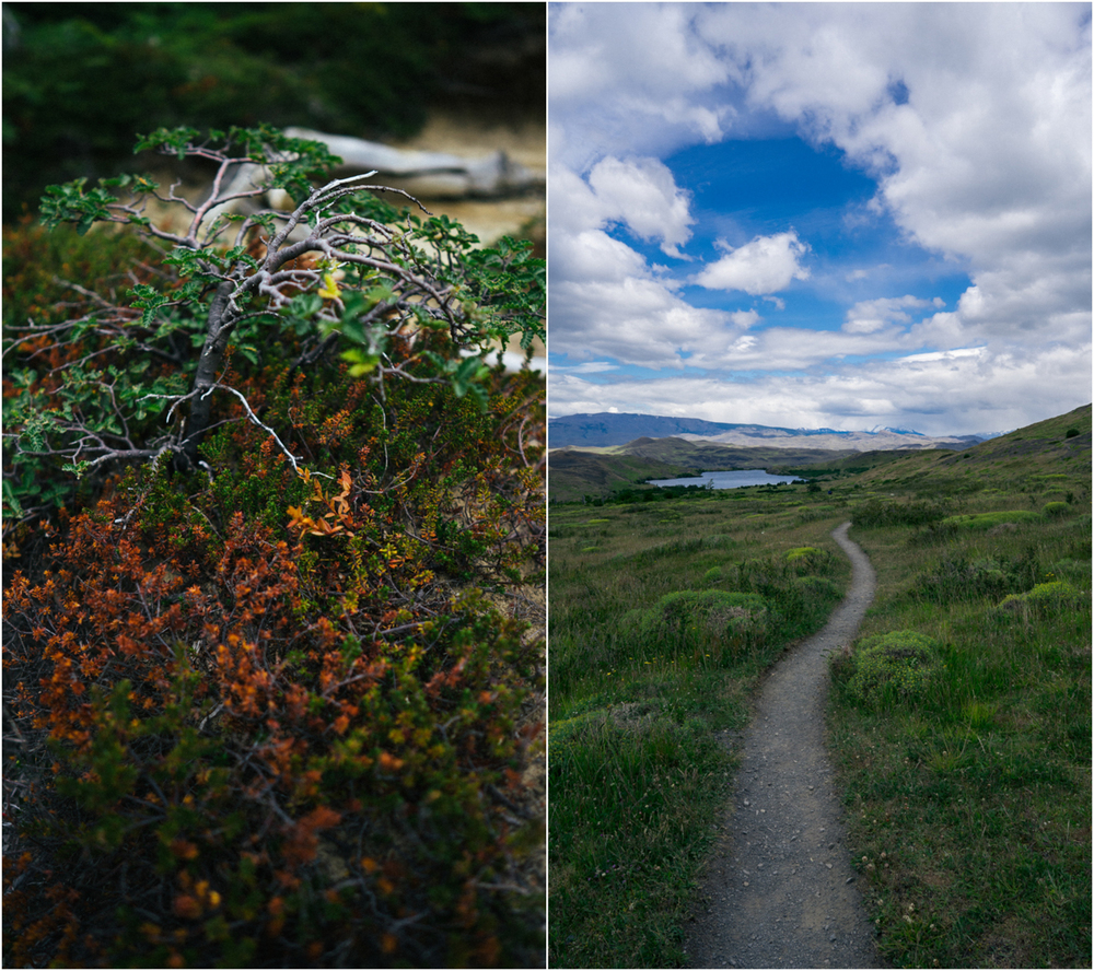 Patagonia STOMPED-31.jpg