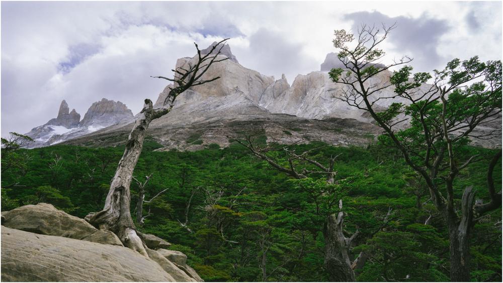 Patagonia STOMPED-49.jpg