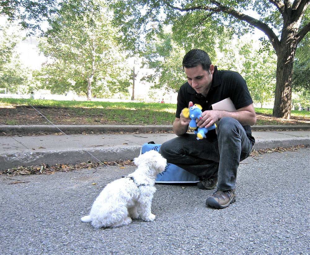 Dog Training In Philadelphia