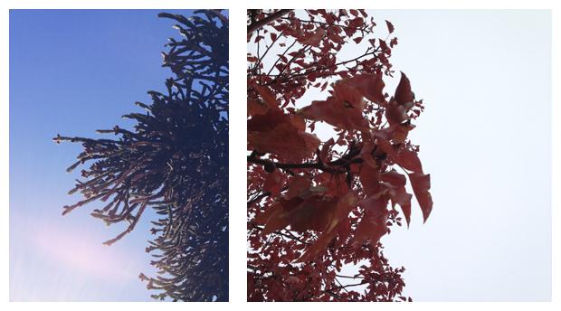 collage_004.jpg