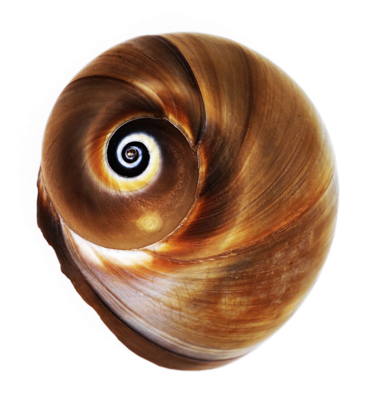 shell4_port.jpg