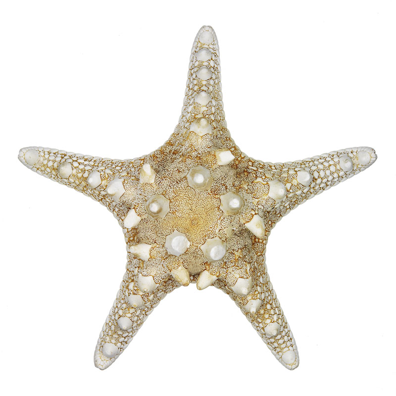starfish_port.jpg
