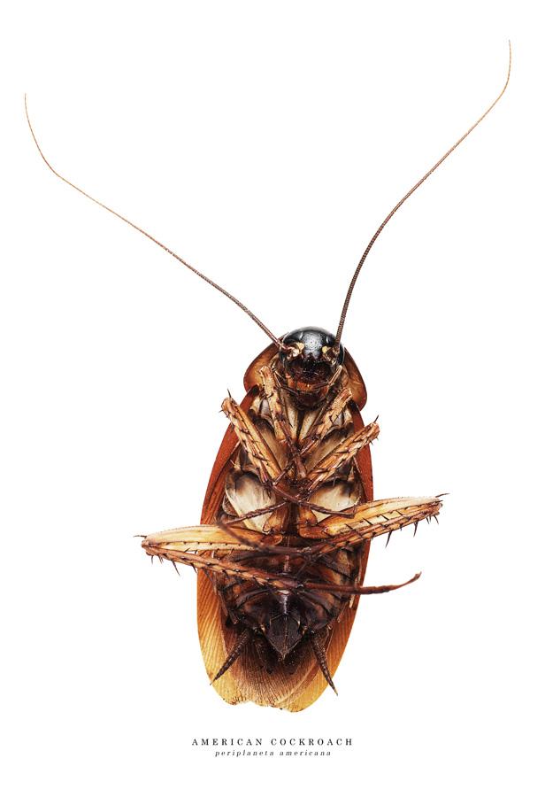 cockroach2.jpg