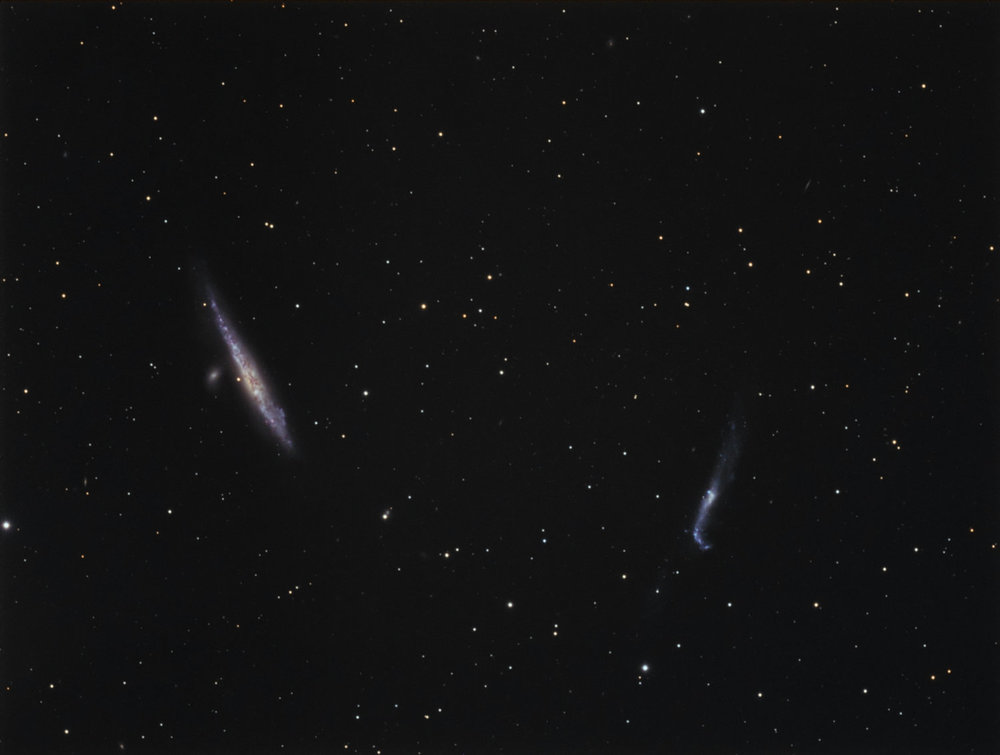 Whale & Hockey Stick Galaxies: Florida Everglades