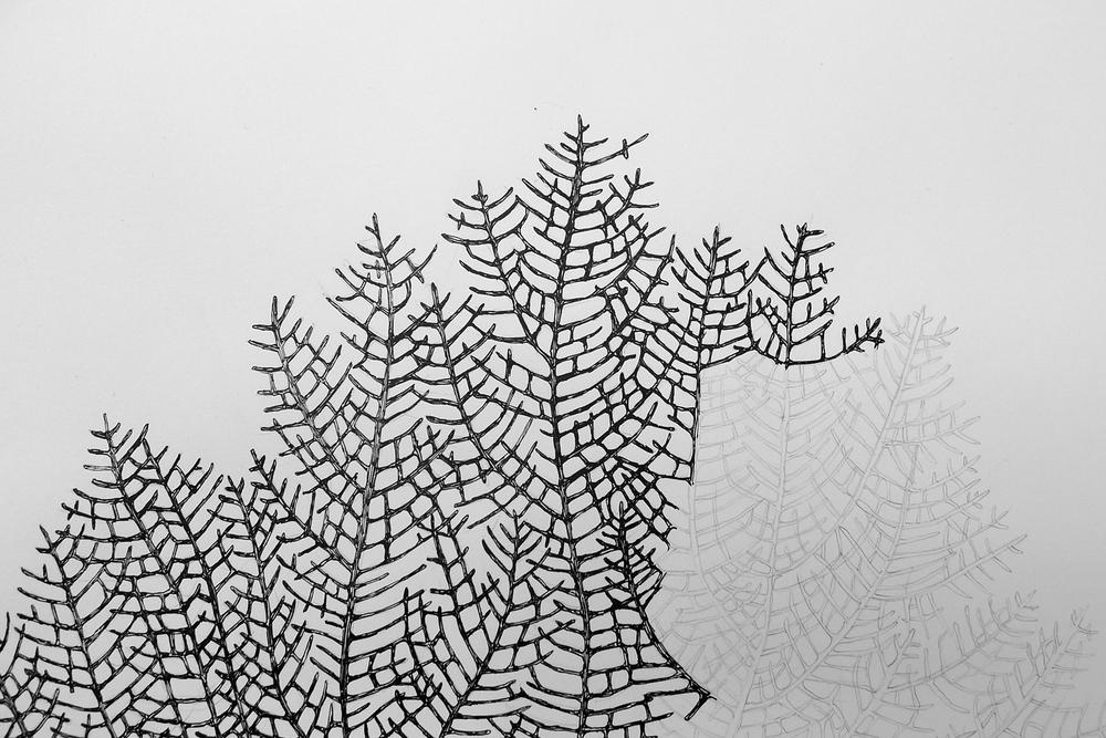 Gorgonian-2.jpg