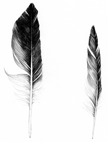 Feathers 14.12.16_01.png