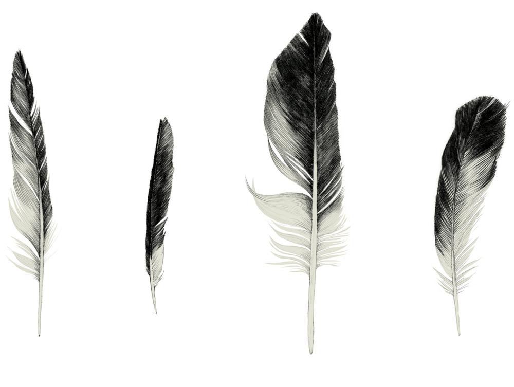 Feathers_landscape.png