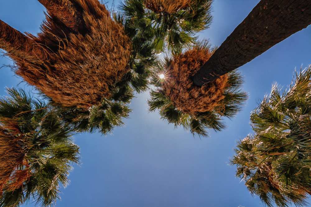Joshua+Tree+Natl+Park-40-Edit--2090009897-O.jpg