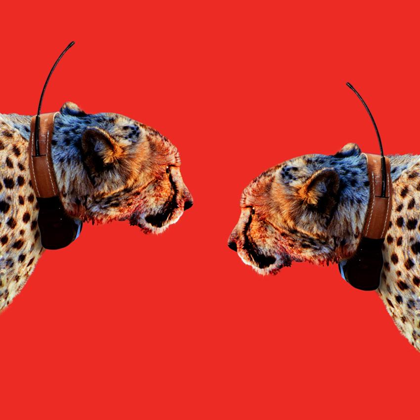 Cheetah_Christian_Pearson_art.jpg