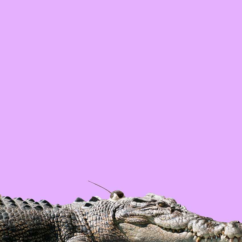 Crocodile_Christian_Pearson_art.jpg