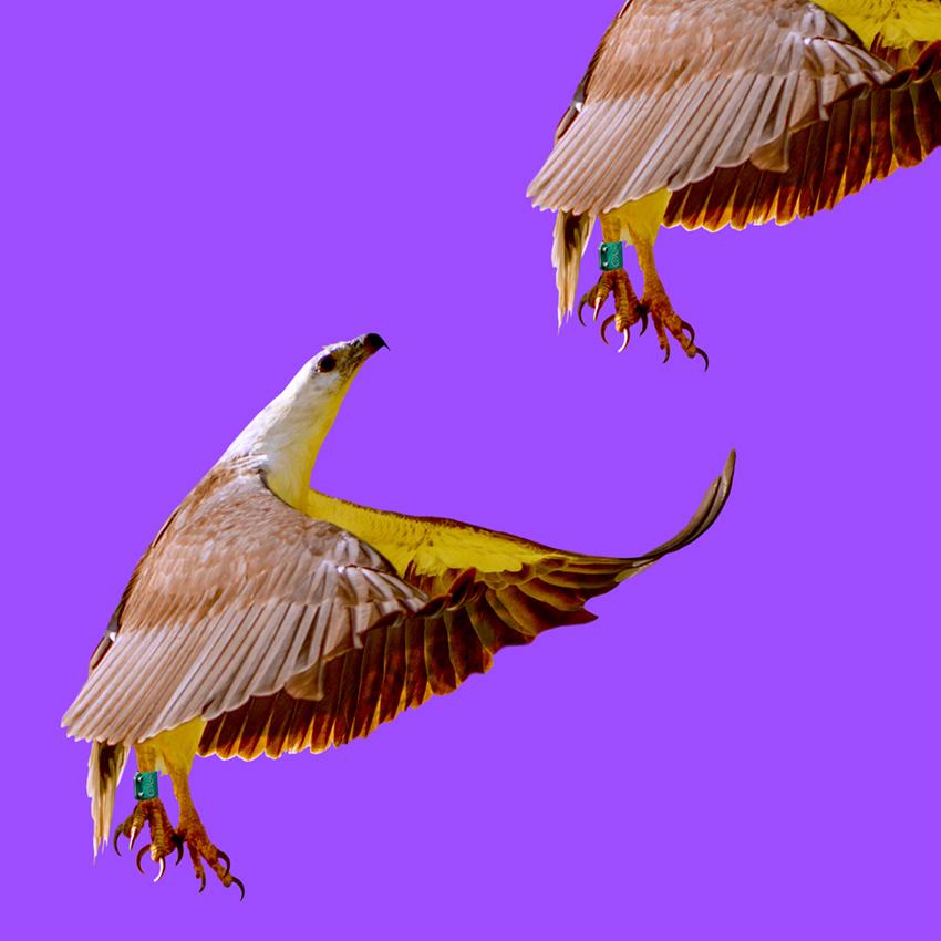 Eagle_Christian_Pearson_art.jpg