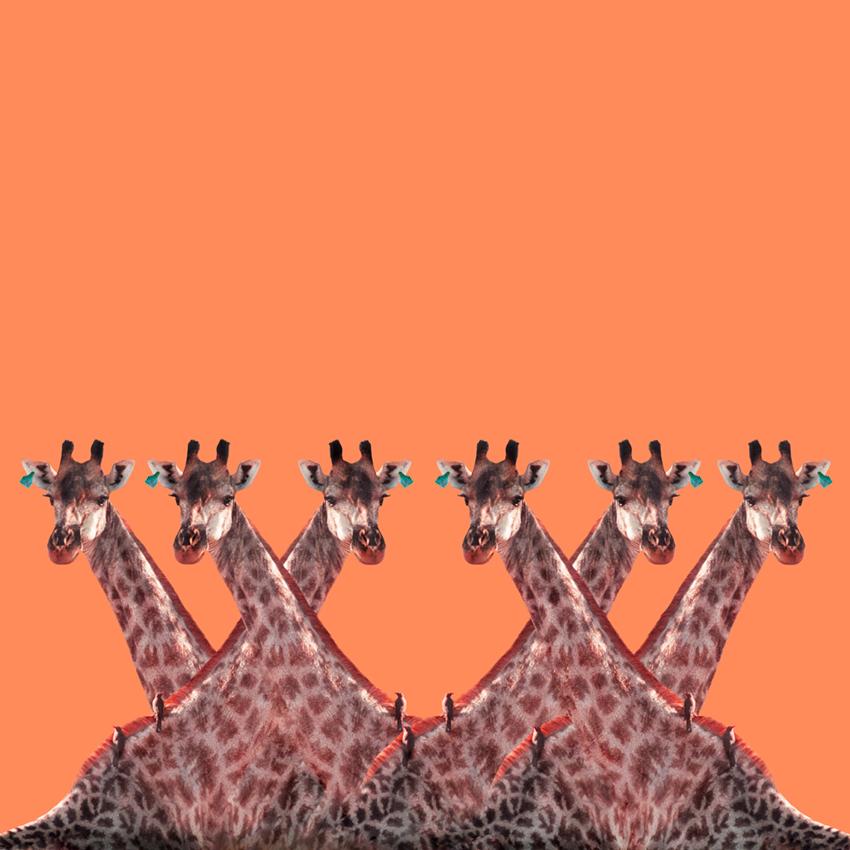 Giraffe_Christian_Pearson_art.jpg