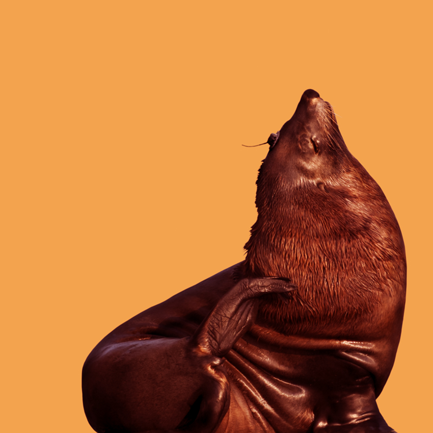 Seal_Christian_Pearson_art.jpg