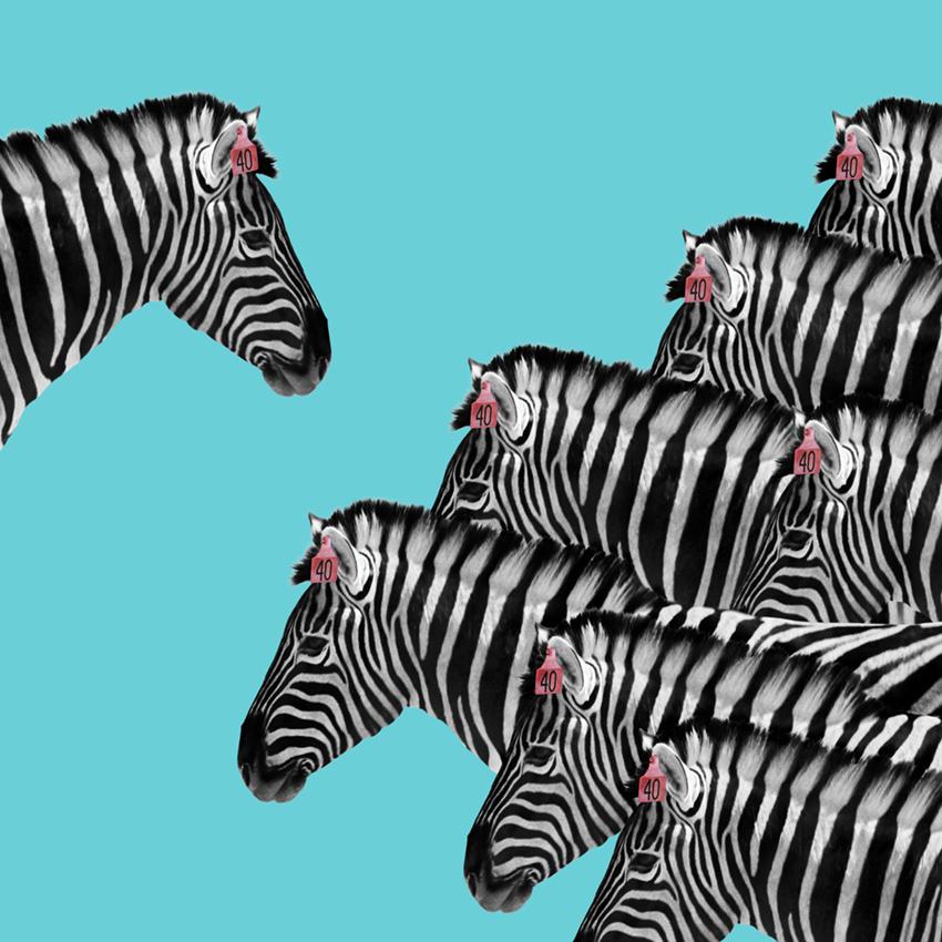 Zebra_Christian_Pearson_art.jpg