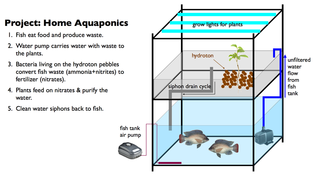 Aquaponics Setup.001.jpg