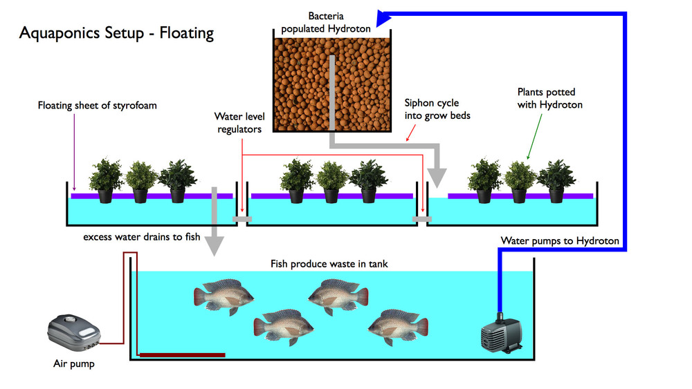 Aquaponics setup - Floating.jpg