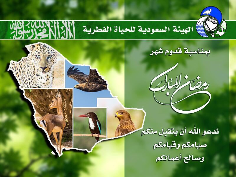 saudiwildlife_2017-May-26.jpg