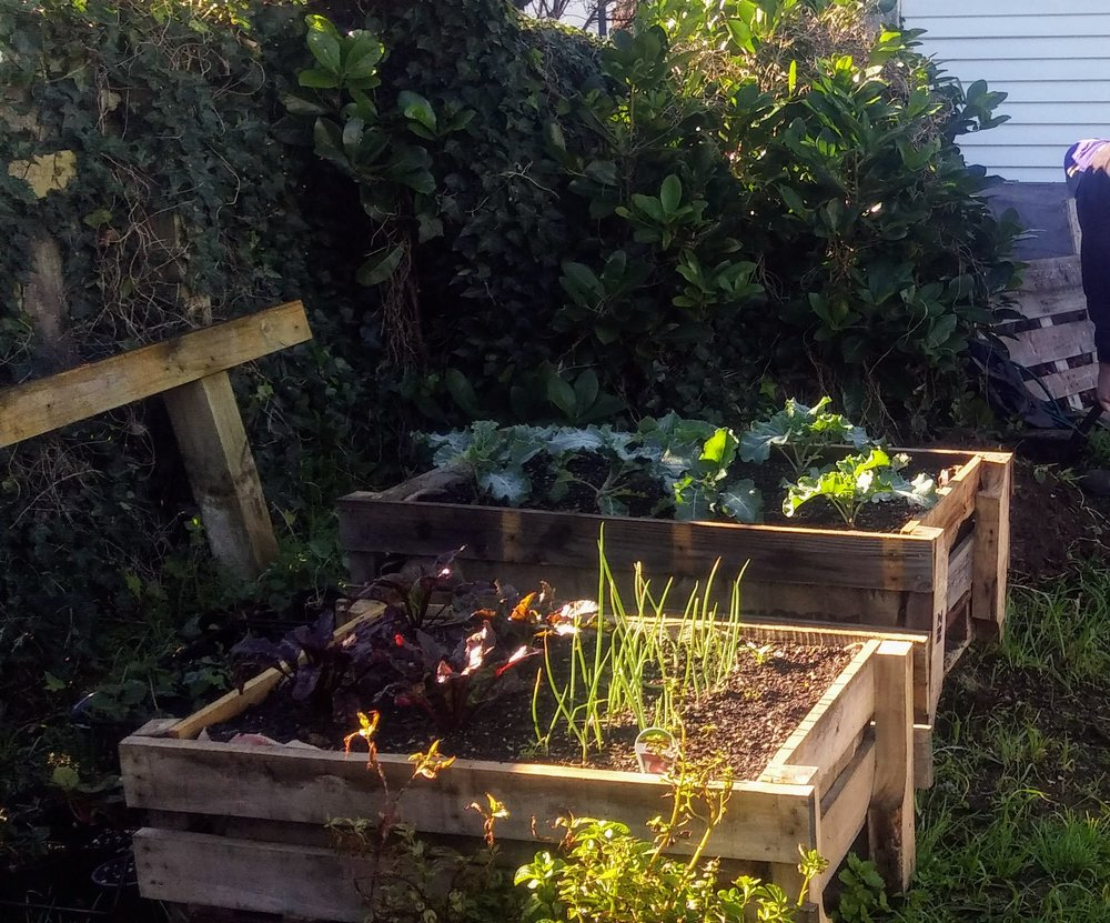 Community garden - Our community garden is growing. Find out what's going on, and how to get involved.Find out more →