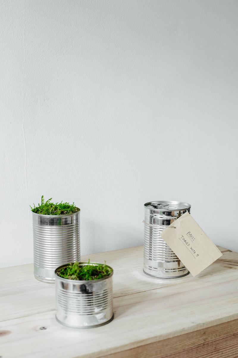 Tinned Moss #UrbanJungleBloggers | Erika Rax