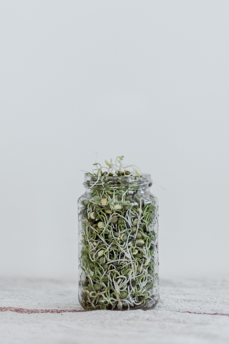 Growing Sprouts | Erika Rax