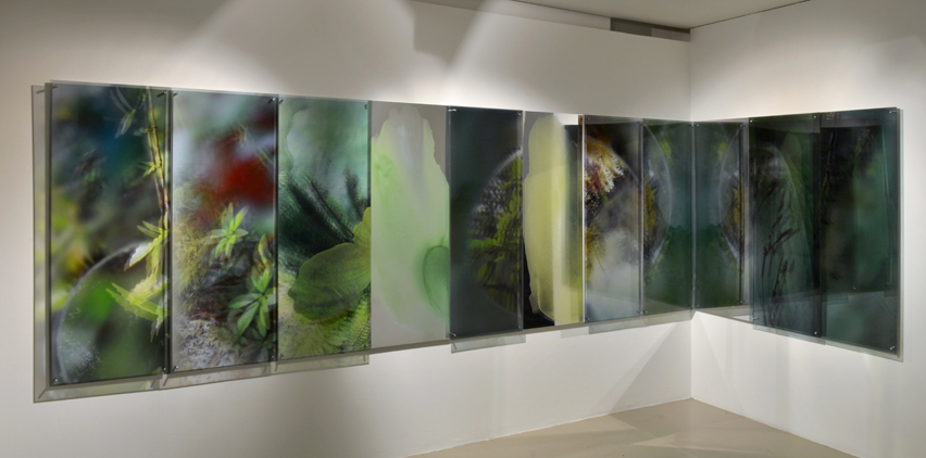 Janet Laurence, Tarkine , 2013,Duraclear photograph, acrylic and mirror,8 panels (4 shown) at 45 x 120 cm each. © Image courtesy of The Fine Art Society.