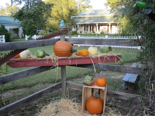 Pumpkins at the Farm