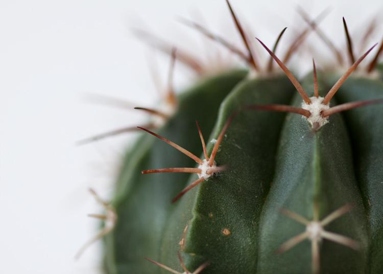 cactusupcloseVicinityStudio.jpg