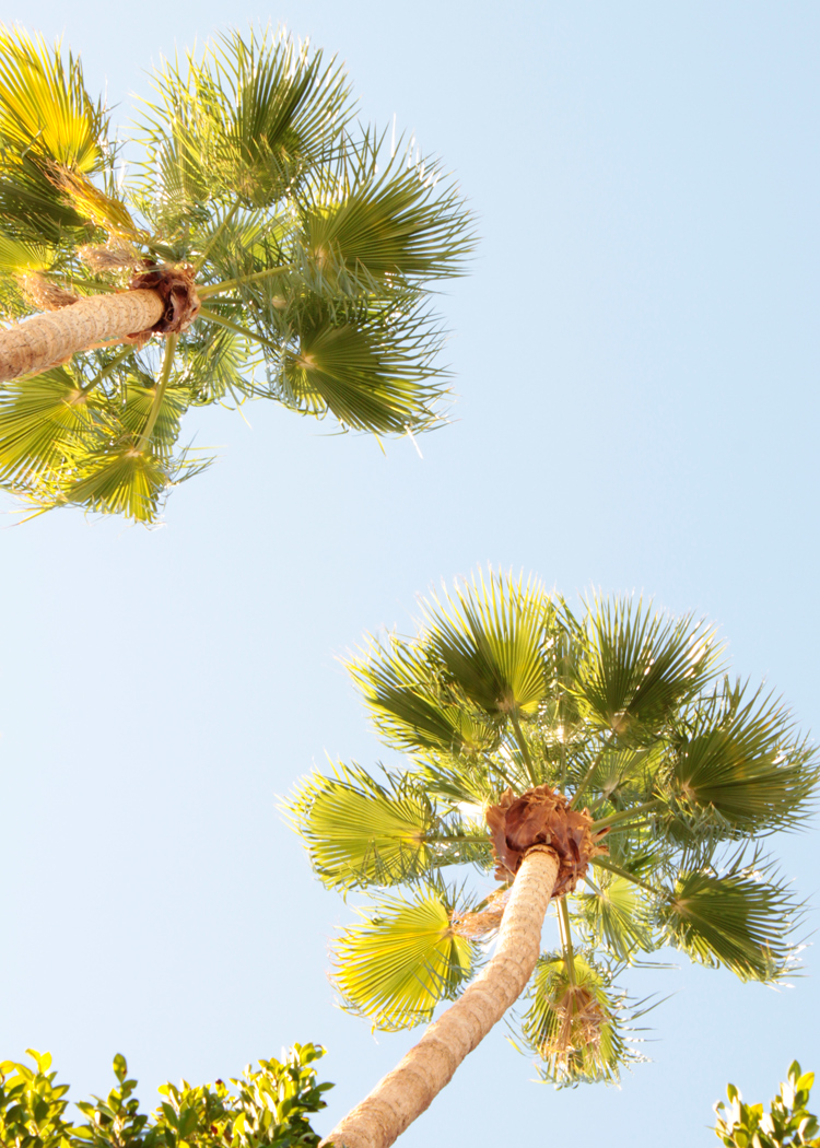 palmsfromhamockVicinityStudio.jpg