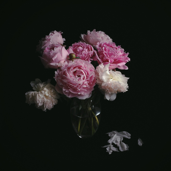 darkdramaticPeonies_iphone.jpg