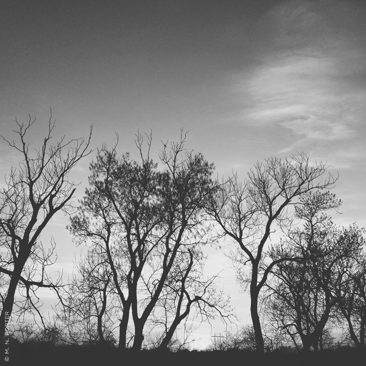 oklahomatrees_MNPorter.jpg