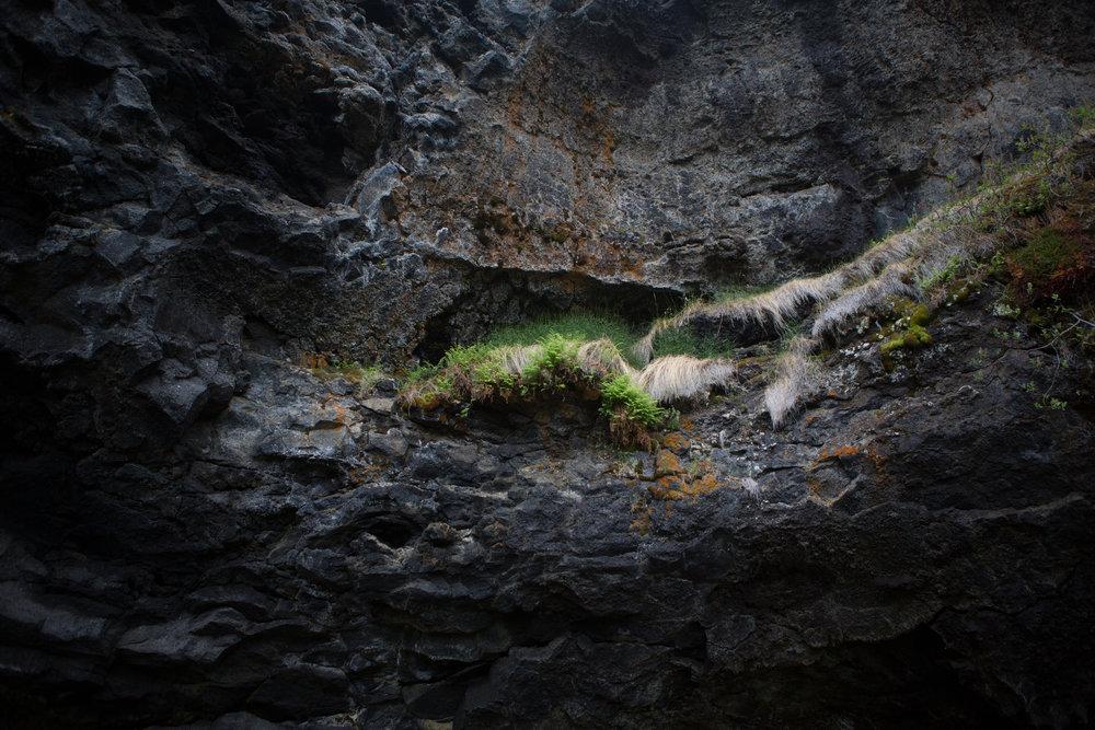 CaveGrass-1.jpg