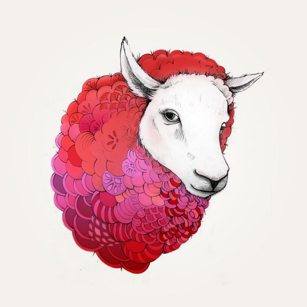Sheep_01.jpg