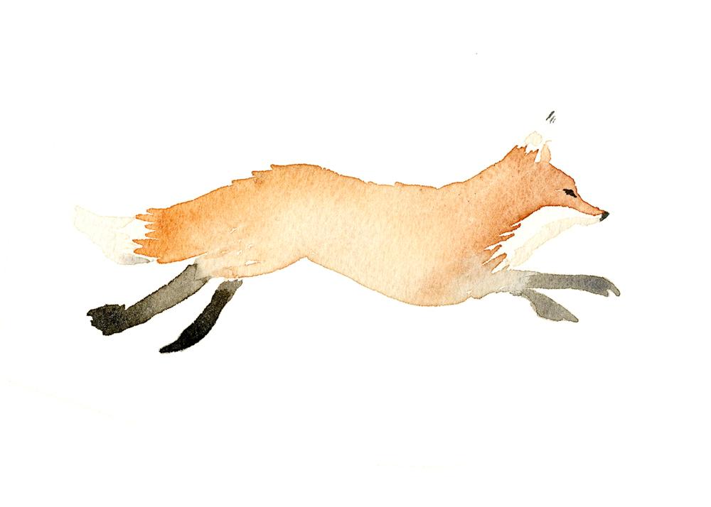 FoxRunning_02_WEB.jpg