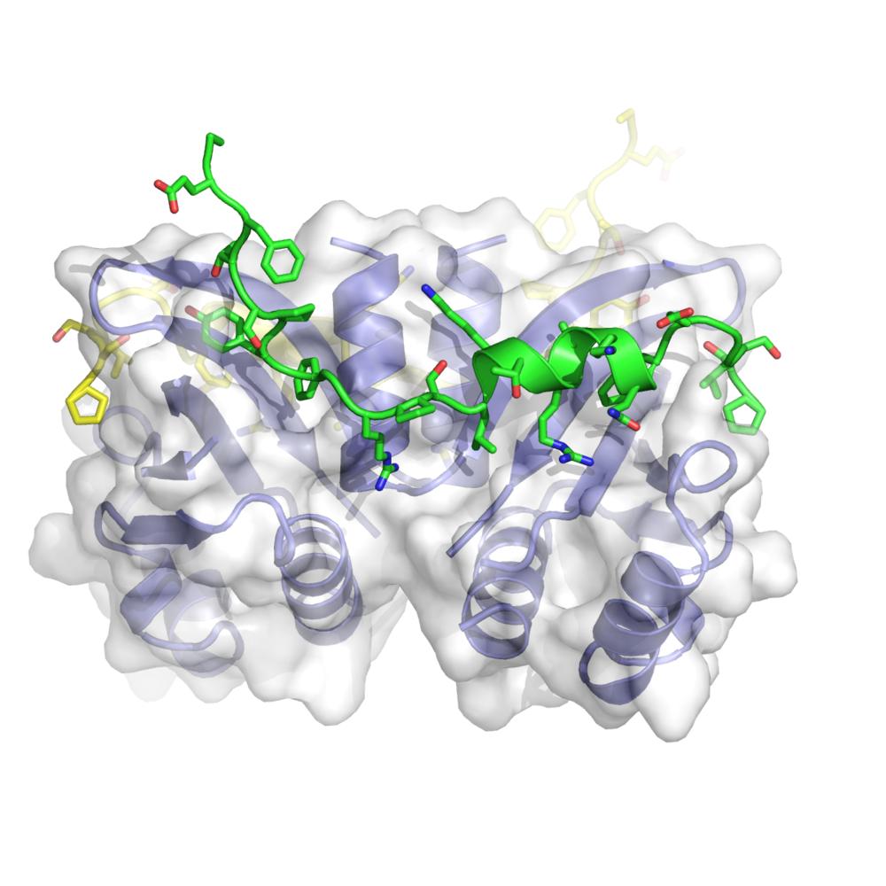 Budding-yeast Csm1-Ulp2