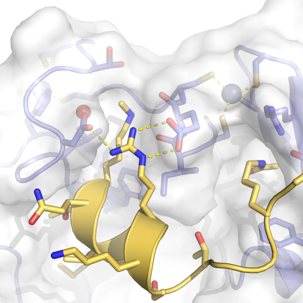 Human Dpf3:Histone H3 tail