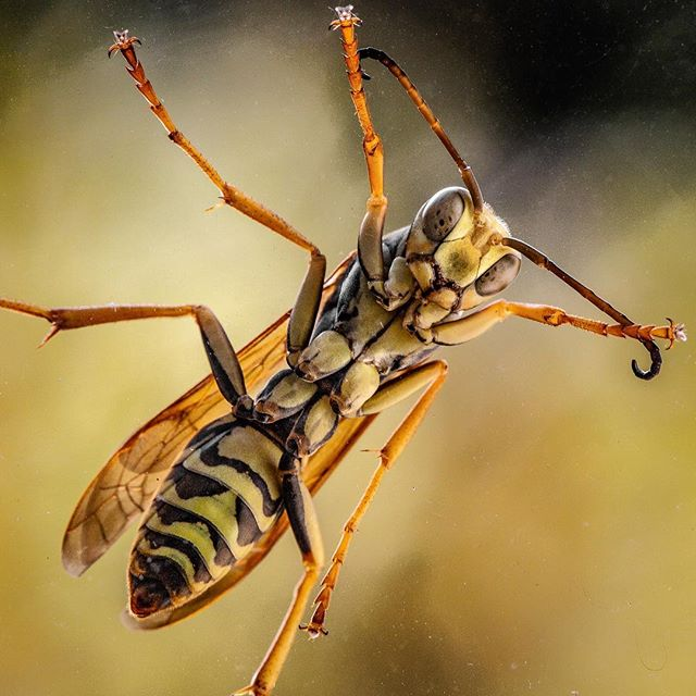 Wendy spotted this fella on the window, and he was kind enough to stick around long enough for me to grab a macro lens. Pretty sure it's a wasp. The days are getting colder up here in #minnesota...not many more days for these guys. . . . @canonusa #100mmmacro #autumn #wasp