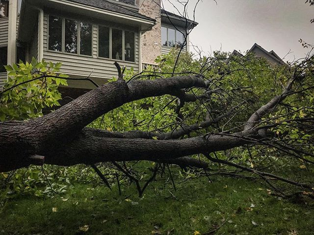 Mr. Tree. Thank you for not landing on the house or hitting any of its inhabitants. I'll take a pain in the ass clean up any day. 🌧 🌳 #lucky