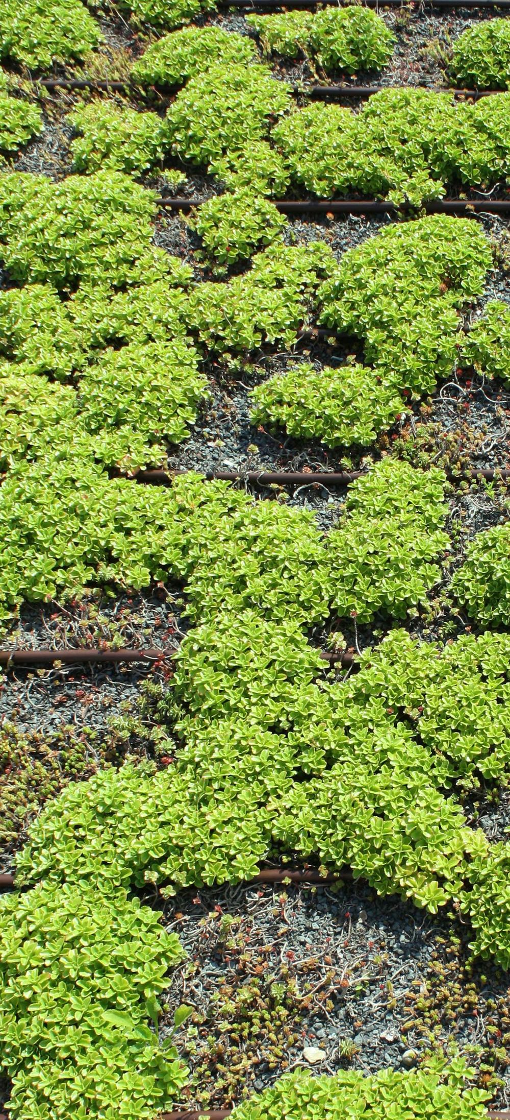 Green-Roof-Close-Up.jpg