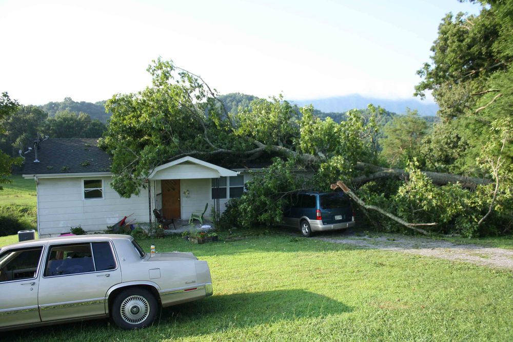 Oak tree on our house and van!