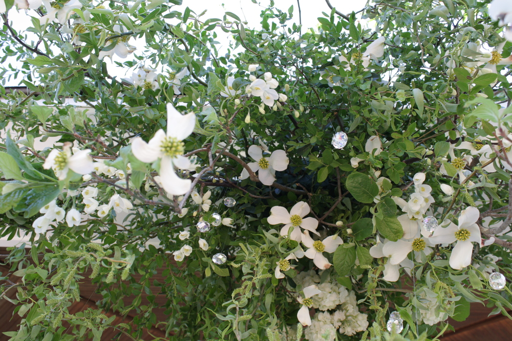 crystal dogwood cannopy.JPG