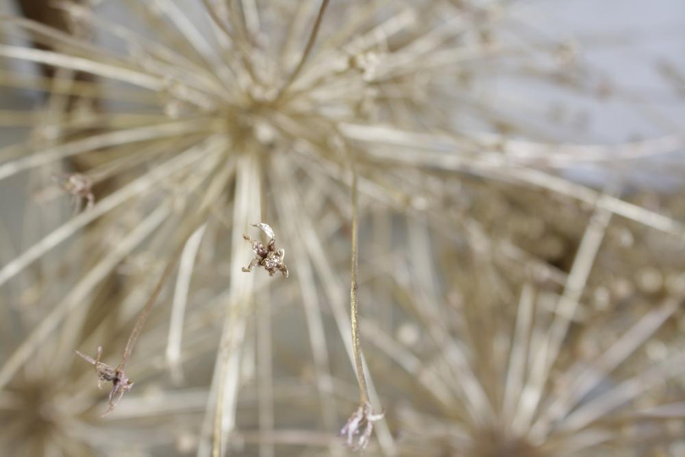 Philosophy Flowers.JPG