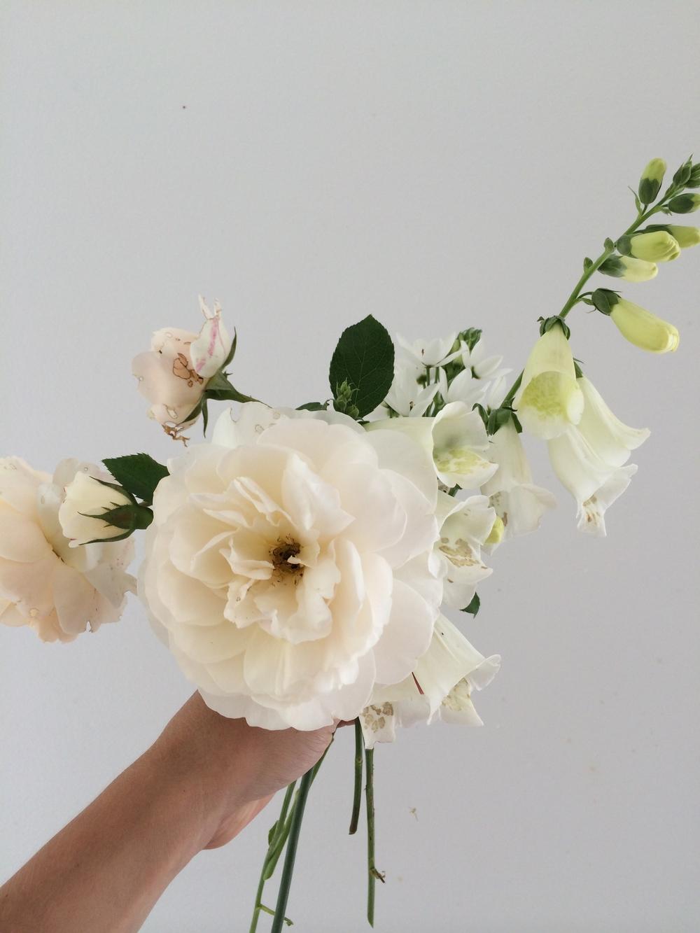 Rose, Foxglove