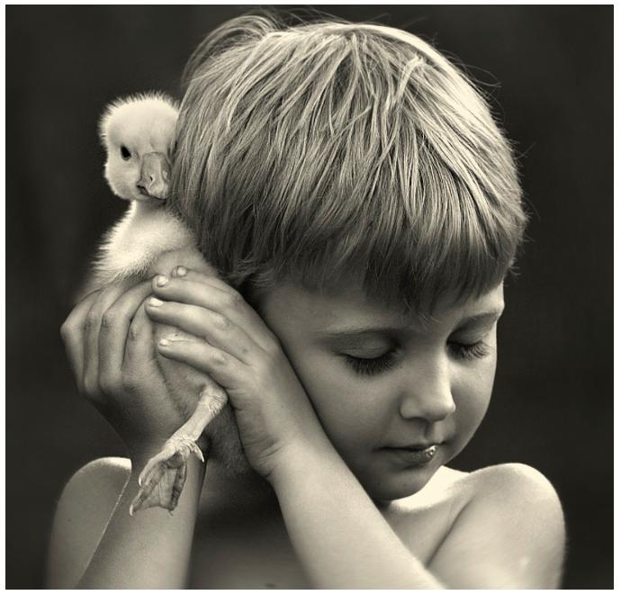 Image by Elena Shumilova