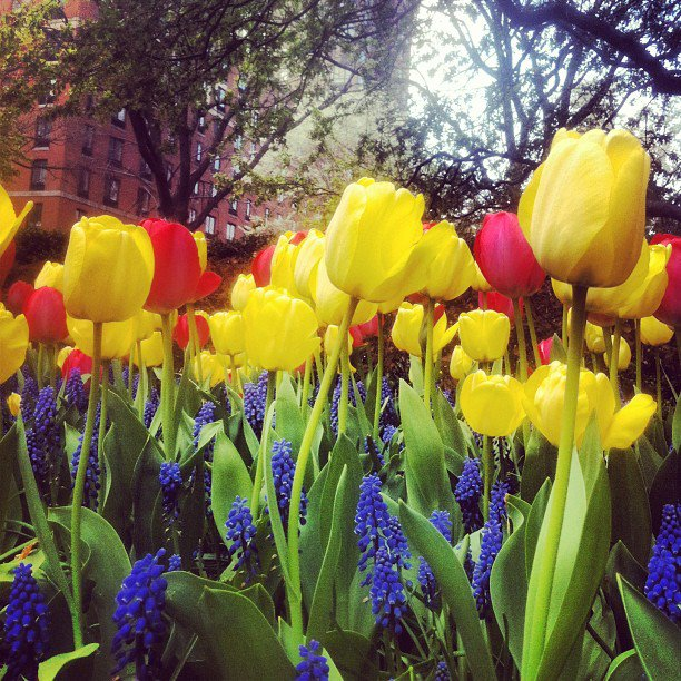 Spring is a symphony of colors... and truly lovely!